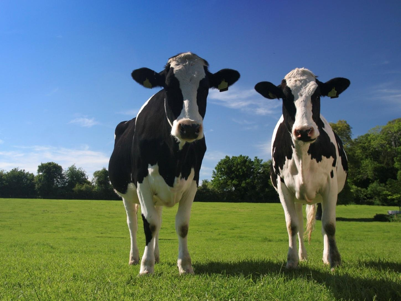 Farm Tenancy Agreement, Devon