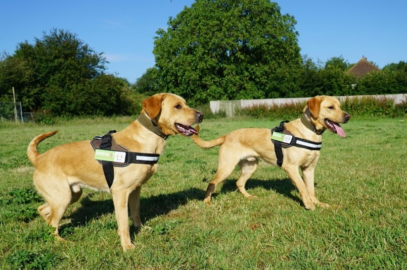 Could Dogs Be The Future Of Japanese Knotweed Detection?
